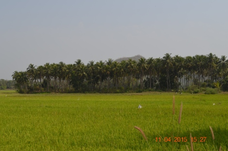 Goan countryside will surprise you in many ways