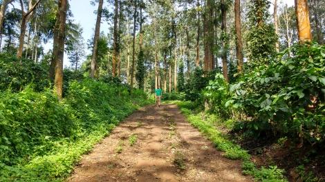A walk amidst the coffee plantation.