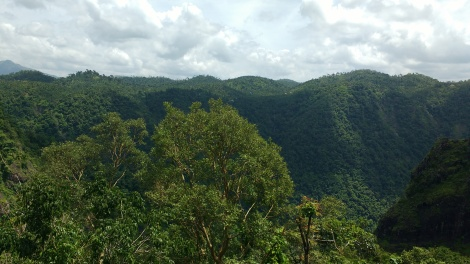 Dense forest around the valley.