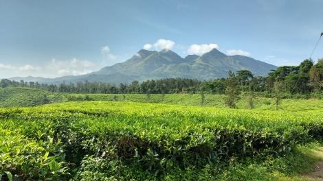 Breathtakingly beautiful tea plantation near Chundale.