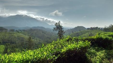 Western Ghat ranges in background.