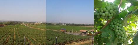 Nashik Valley